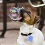 These 40 Hilariously Perfect Timing Dog Photos Will Make You Look Them Twice