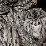 40 Hidden Owls That Are Pro In Their Impressive Camouflage Skills