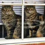 40 Animal Twins Photos That Make You Confused Who's Who