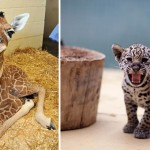 50 Baby Animals That Will Kill You With Their Cuteness