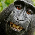 40 Animals Posing For Camera In The Best Way Possible