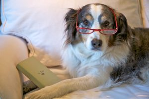 Older dog with reading glasses