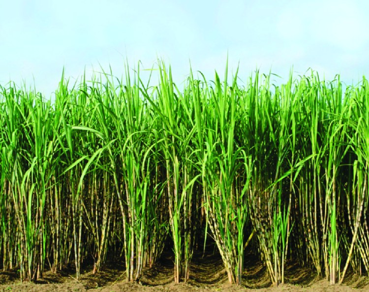 Guía de Fertilizantes Nitrogenados para Cultivos   Intagri S.C.