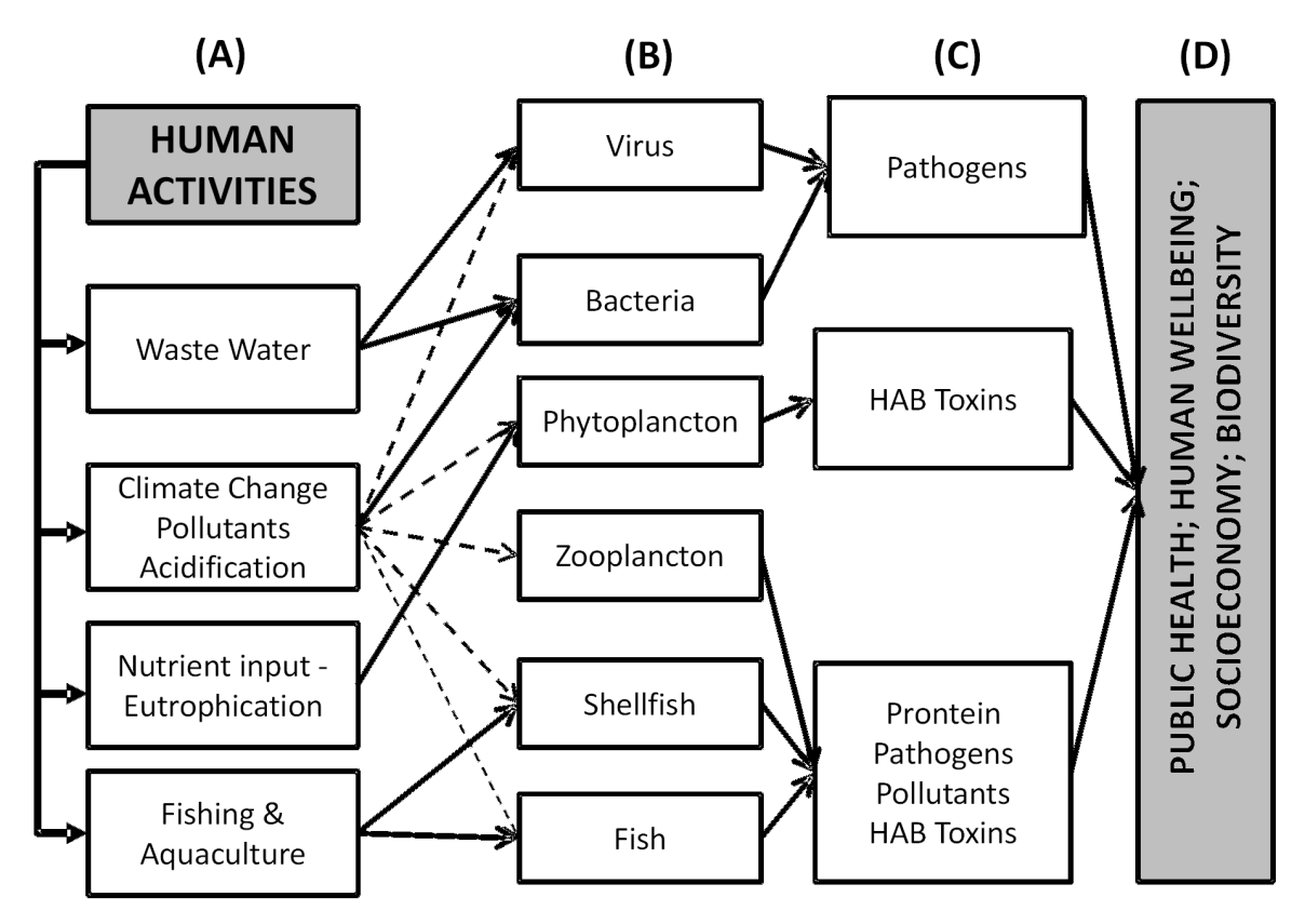 Oceans And Health Pathogens In The Marine
