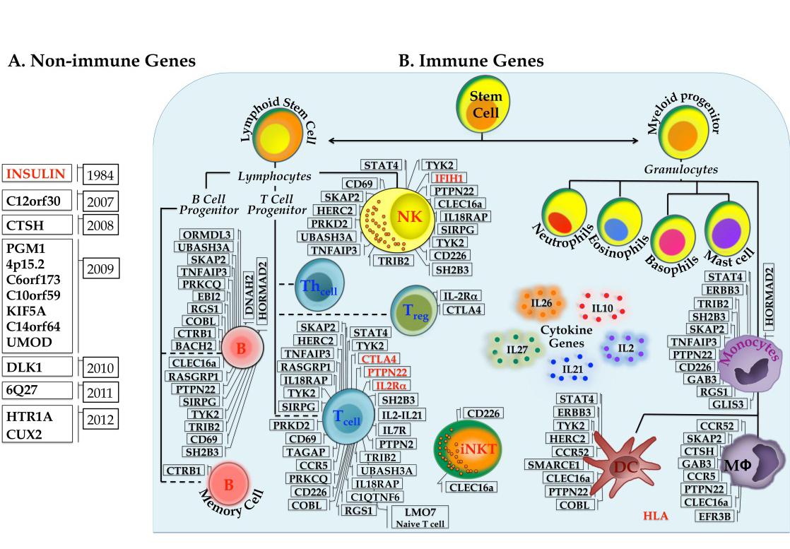 Genes Involved In Type 1 Diabetes