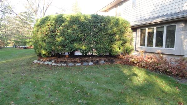 Landscaper before and after