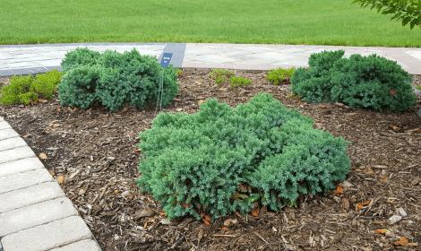 landscape companies, landscaping company, Waukesha landscaping, low maintenance