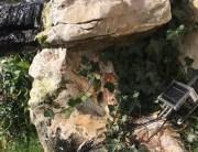 instalado smart garden intelkia