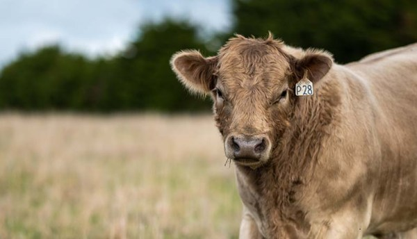 Inmarsat connects cattle farmers with reliable connectivity solution