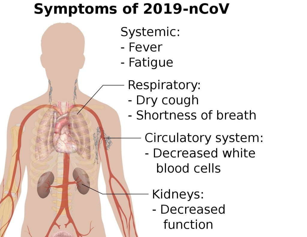 Coronavirus Attacks The Lungs And The Kidneys The Crosstalk Could Kill You Intelligent Living