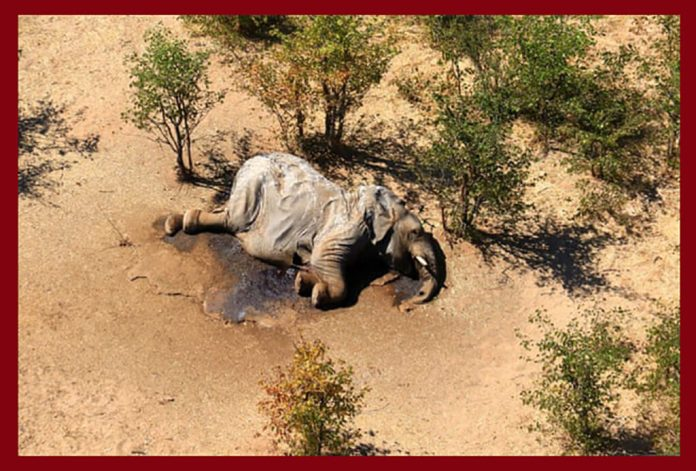 The remains of an elephant in the Okavango Delta