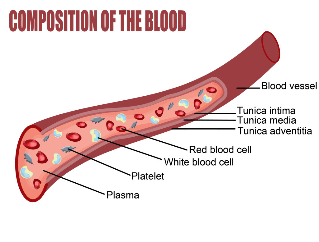 A Brief Review On The Study Of Blood And Its Different