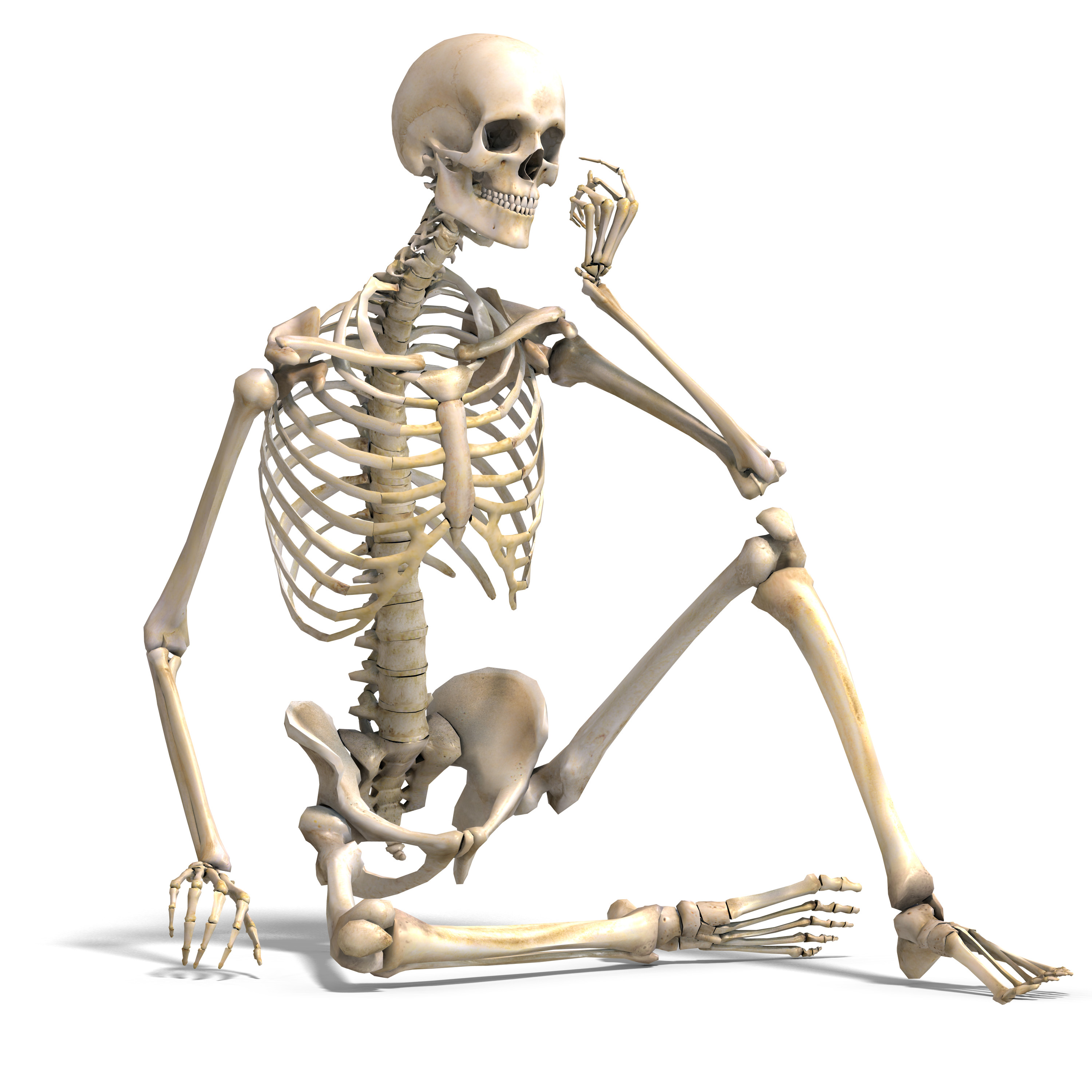 An Introduction To The Skeletal System Bones And