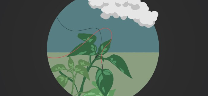 What the augmented plant thinks about its domestication