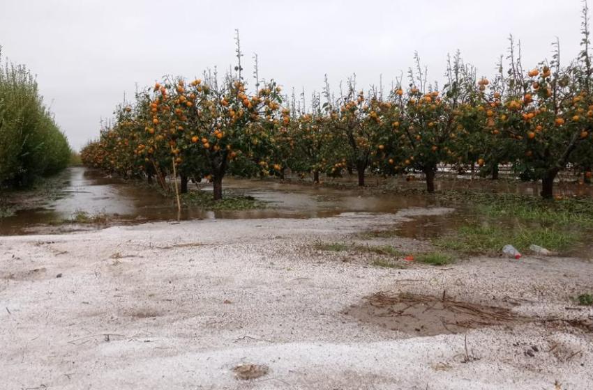 El temporal causa pérdidas de más de 35 millones en cultivos de caquis y cítricos