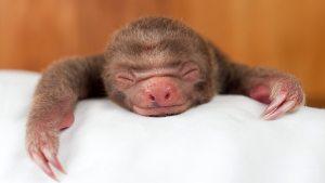 asleep1