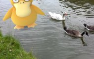 Pokémon Go real ducks with pokemon
