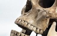 Human Skulls sold on eBay