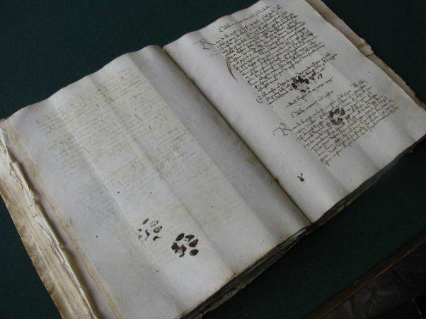 cat prints on book