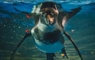 Penguins mooch