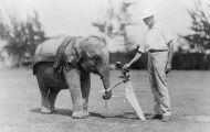 Golfer's Day