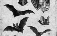 images of bats