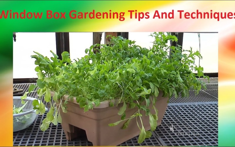 Window Box Gardening Tips And Techniques – How To Grow Vegetables Indoor At Home