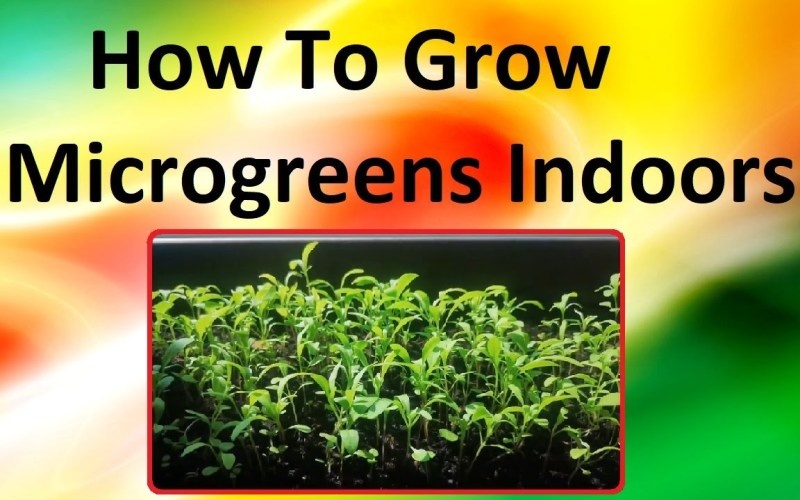 How To Grow Microgreens Indoors – Step By Step Instructions