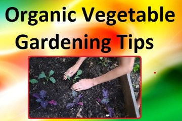 Organic Vegetable Gardening Tips and Tricks – Seeds, Soil Sprouting and More