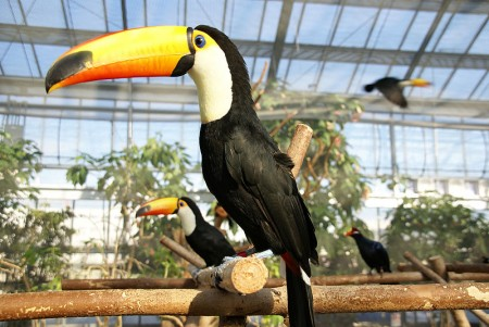 toucan facts