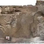 Saddled up for eternity: The horses of Pompeii that almost got away