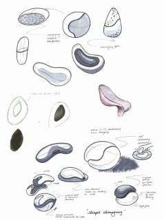 sketch_massager2