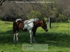 IF-Texture-Horse-Pasture-IMG_5602