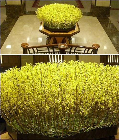帝国ホテルの菜の花
