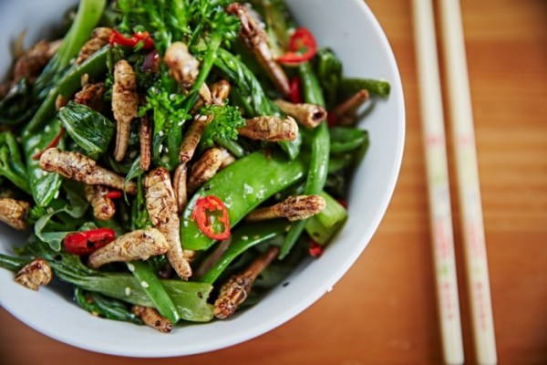 Stir fry grasshoppers edible insects