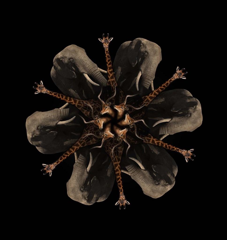 Mandala africano 2. Impresión Giclée sobre papel metalizado, 80 x 55 cm. Edición 1/5. 2016.