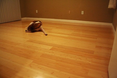 How to change the look of your home      Interior Designing Ideas Cork Flooring  This kind of flooring is obtained from cork oak tree  and  this innovative floor coat tops the list and it is inexpensive as compared  to other