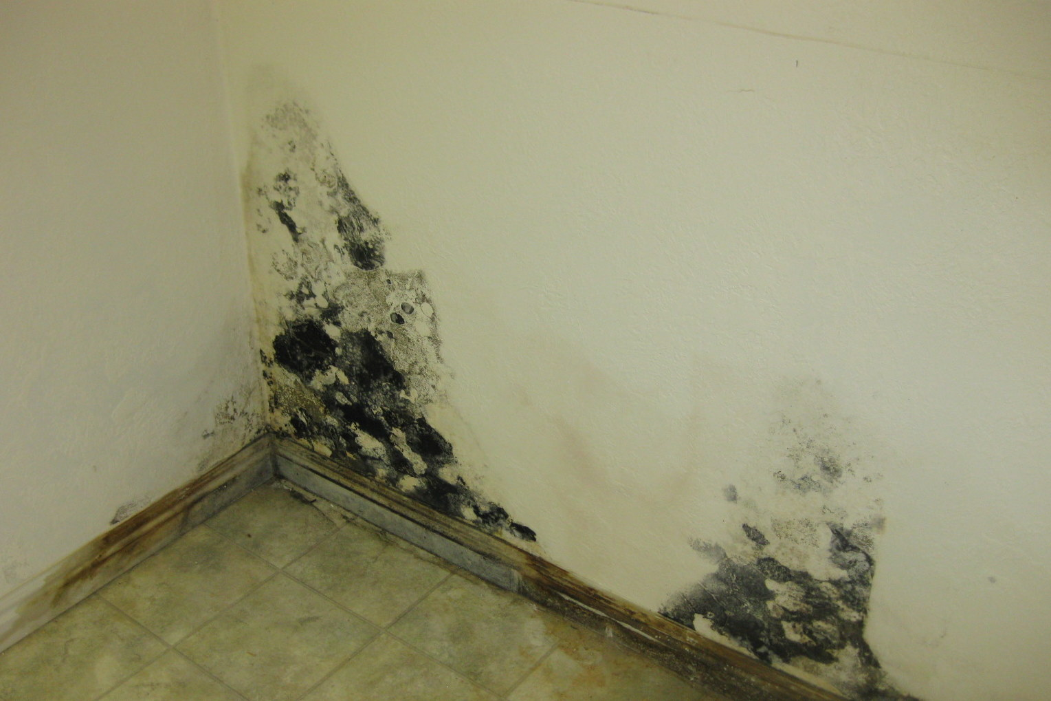 How To Get Rid Of Molds On The Walls Of Your House