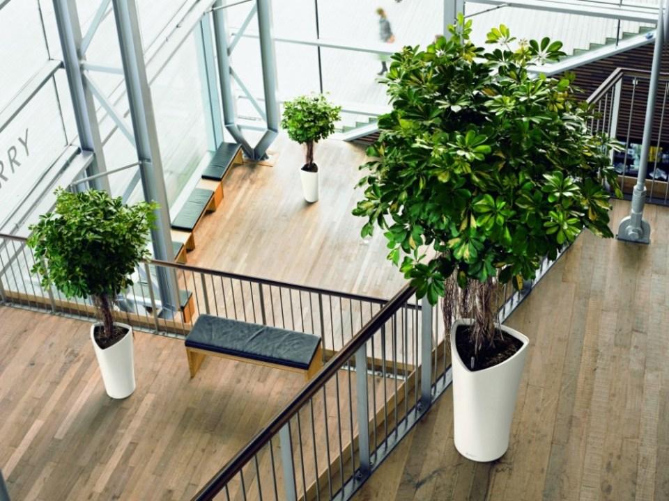 best-indoor-plants-1000x750