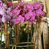 orchids012715