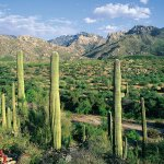 Springtime in Arizona Guided Vacation