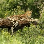 Image Courtesy © ChristianSperka_Thanda Safari Private Game Reserve