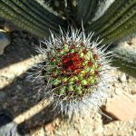 Image Courtesy Sonoran Desert NPS CC BY 2.0_Flickr