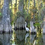 Image Courtesy Rodney Cammauf_Florida Everglades NPS