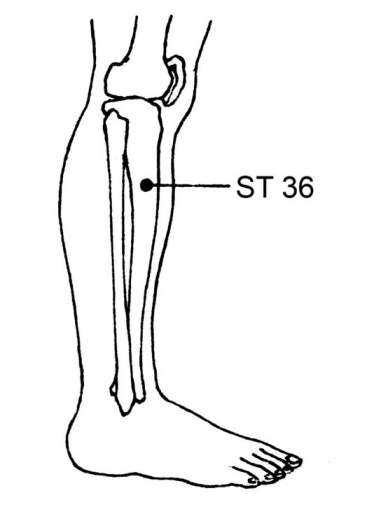 ST36 Man Dan Yang Acupuncture: The 12 Miraculous Points