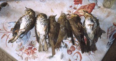 Los pajarillos se comen, pero muchos mueren y se tiran porque el parany es un método no selectivo