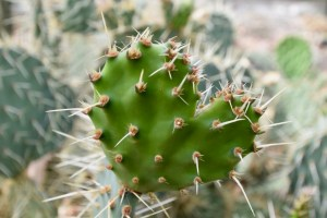 The needles on a cactus reduce water loss by transpiration