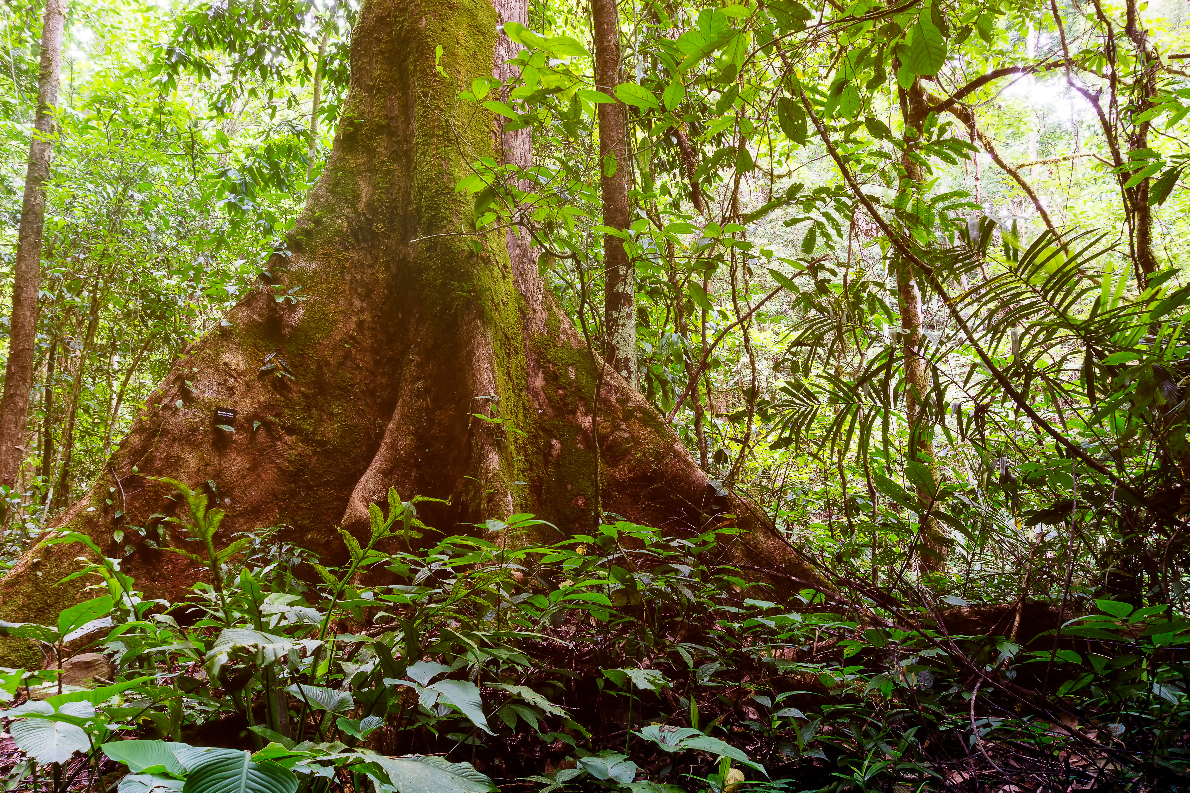 What Is The Structure Of The Tropical Rainforest