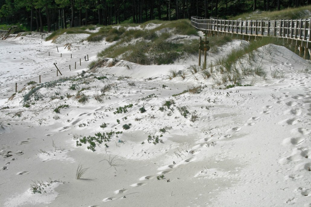 Dune regeneration and boardwalk