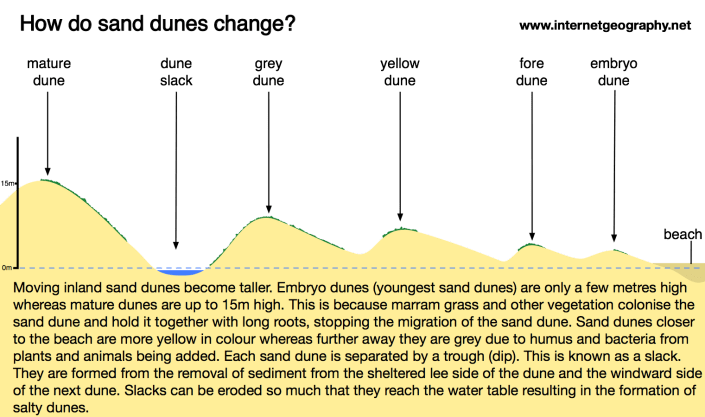 How do sand dunes change with distance from the beach?